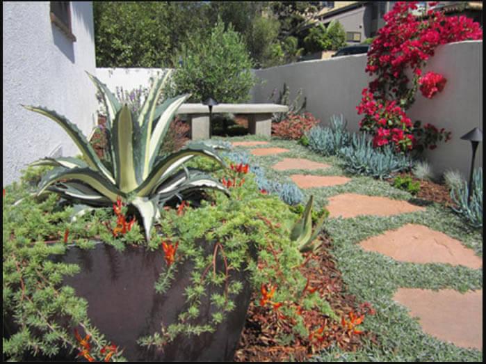 how to create a garden using california native plants